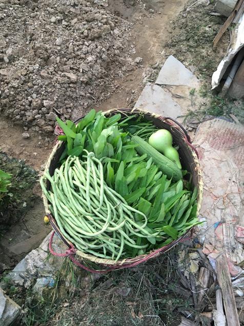从地里收一箩筐蔬菜
