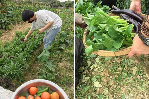 公司部门团建青菜采摘活动