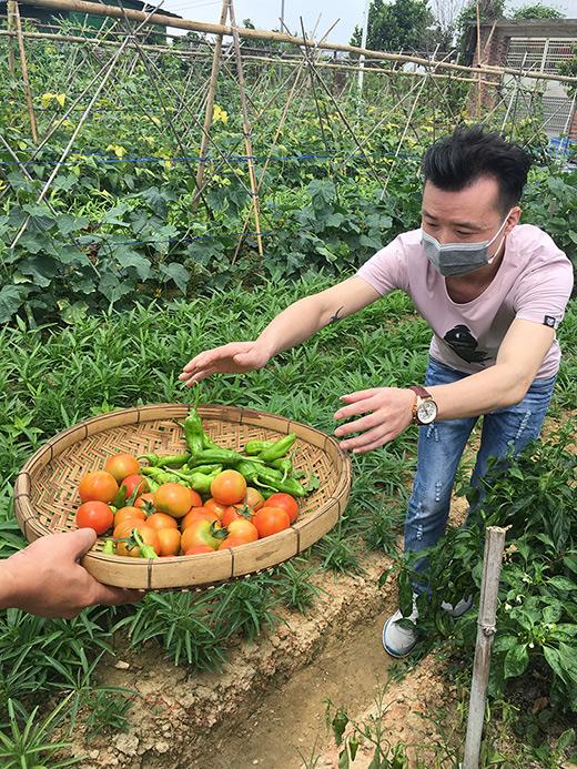 游客现场采摘番茄虎皮青椒