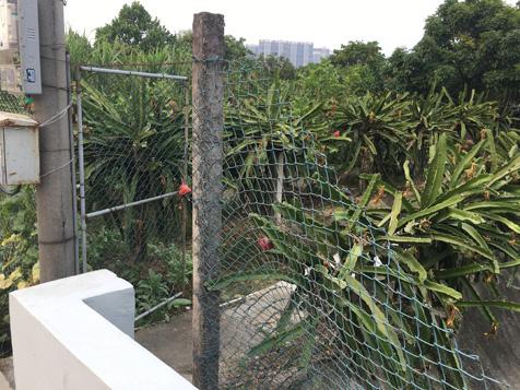 大王洲火龙果园
