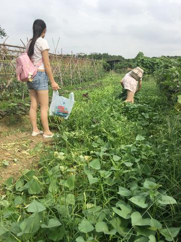 7月份东莞大王洲农家乐有什么青菜采摘?