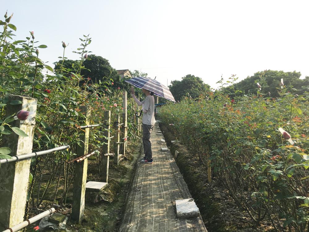 大王洲玫瑰花园